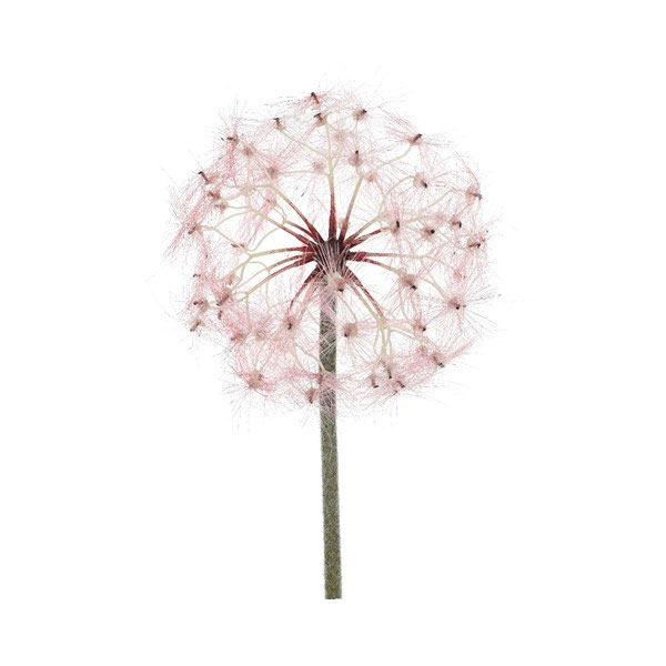 Artificial Pink Dandelion on Stem 90cm