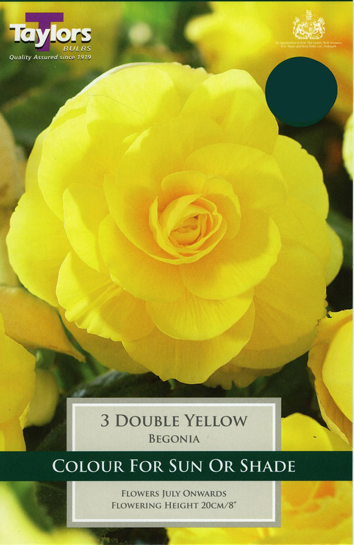 Begonia Yellow Double