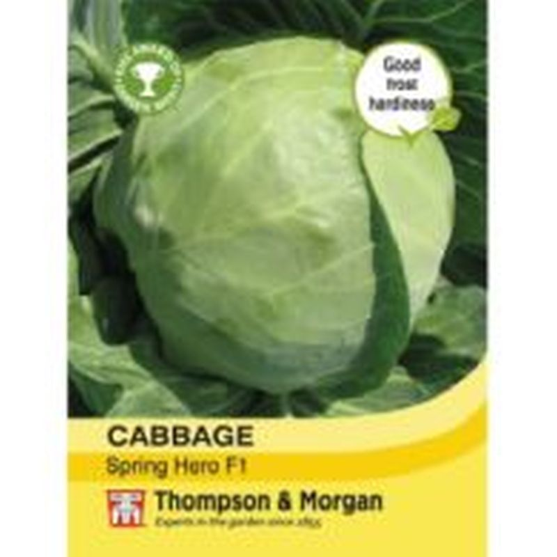 Cabbage Spring Hero F1 Hybrid