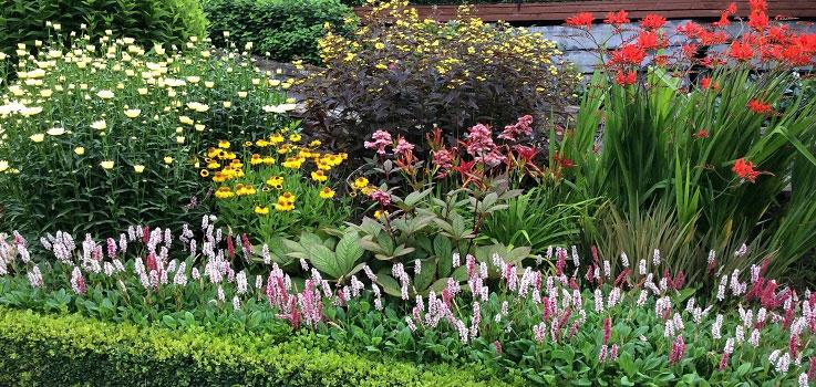 Summer plants in garden