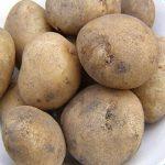 British Queens Seed Potatoes