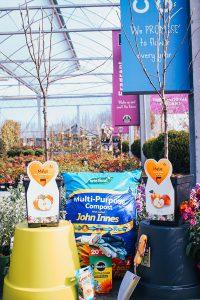 Patio-fruit-planter