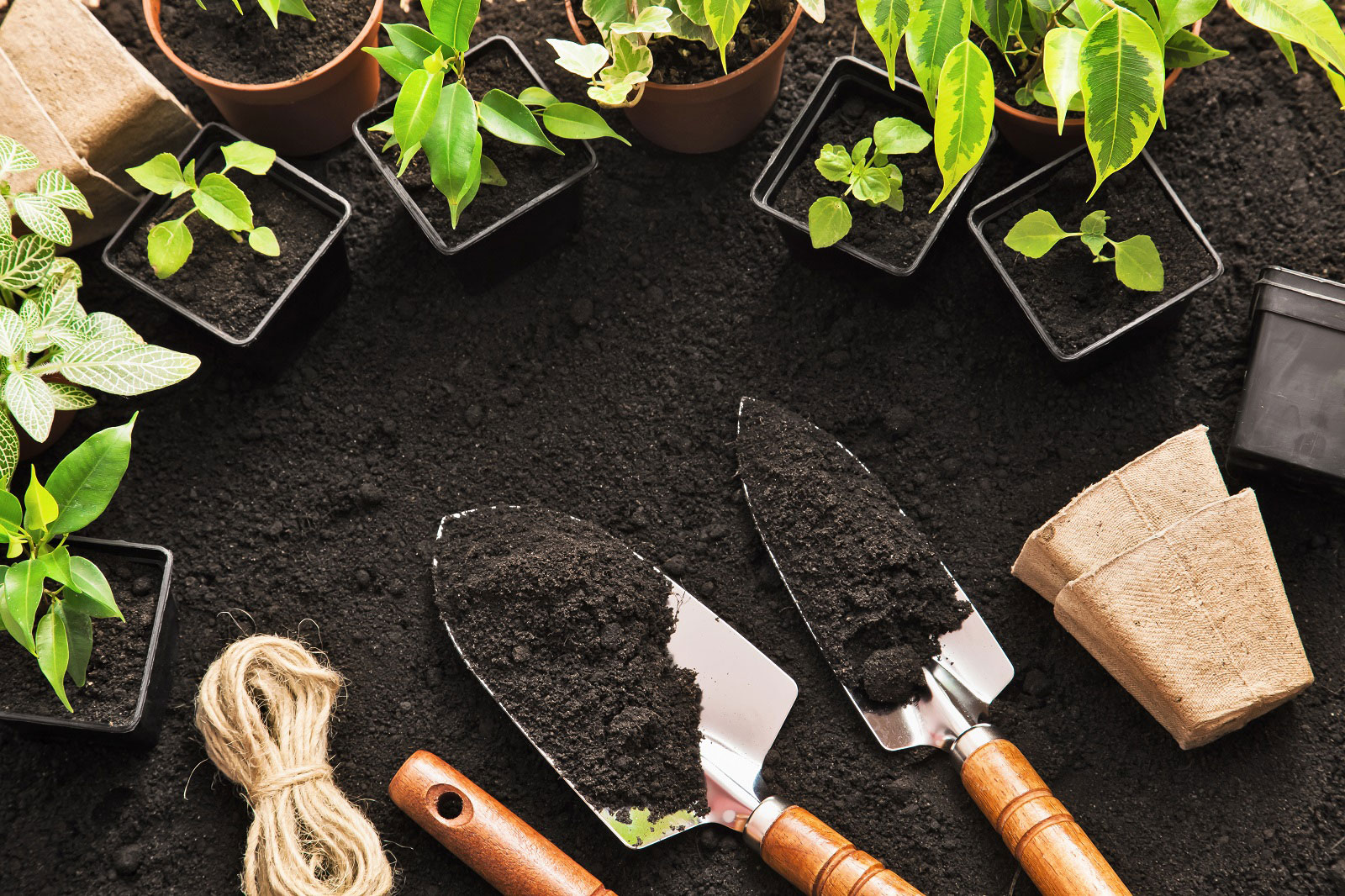 Plants-and-tools-in-soil