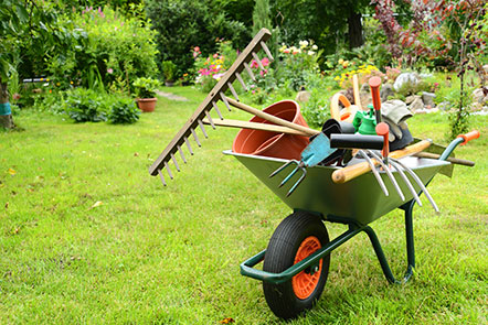 Wheelbarrow of garden tools