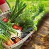 farmer holding vegetable basket