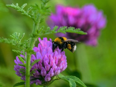 Bee landing on purple flower