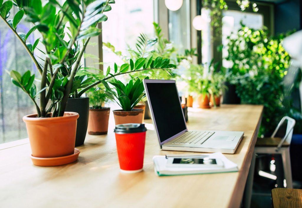 Houseplants on office table