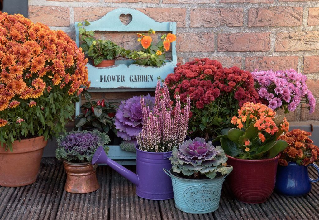 Autumn plants and pots