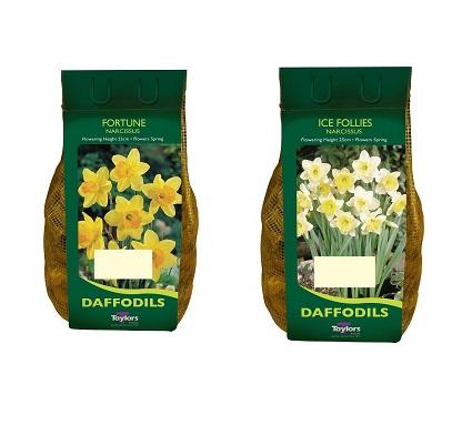 Daffodil 2 for 10 euro